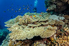 Red Sea reef (Jim Greenfield) Tags: egypt furyshoals redsea