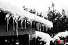 the morning after (Michele Rallo | MR PhotoArt) Tags: michelerallomichelerallomrphotoartemmerrephotoartphotopho neve snow snow2018 nevicata2018 nevicata nevicataaroma nevicataaroma2018 ghiaccio ice freddo cold stalattidi bn white neve2018roma