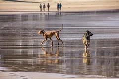 De paseo (cruzjimnezgmez) Tags: dog pet agua mascotas arena playa orilla mar reflejos depaseo perros