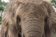 RITRATTO    ----    PORTRAIT (Ezio Donati is ) Tags: animali animals natura nature foresta forest alberi trees africa costadavorio grandlahouarea