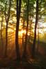 The awakening of the Forest (Hector Prada) Tags: bosque niebla luz árbol amanecer bruma contraluz forest fog mist tree sunrise sun sunbeams light sol backlight golden hojas leaves paísvasco basquecountry