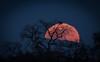2018 Full Moon (Richard Pochop Photography) Tags: moon beautiful fullmoon sony photographer moonrise landscapephotography art