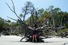 DSC_8633 (Tripping On Change) Tags: southcarolina harborisland island beaufort cemetery ocean beach shrimpshack alligator mussels nature