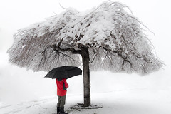 Snow Umbrella (aaronrhawkins) Tags: storm tree winter cold weather utah provo home joshua boy hide aaronhawkins red coat umbrella blizzard white child