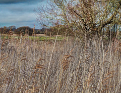TitchfieldHavenNo47 (iankellybn26dj) Tags: england uk coast estuary hampshire south winter light landscape marshes