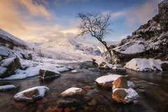 A tree and some stuff (chrismarr82) Tags: nikon scotland glencoe sunset tree river water snow winter