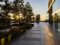 Cal Plaza at Sunrise (waterman1) Tags: dtla losangeles calplaza sunrise hasselblad hasselbradx1d x1d xcd45mm