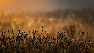 Teasel Field