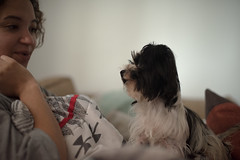 In discussion (Rushay) Tags: african animal canine dog love pet portrait puppy southafrica stare watching young