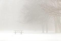 picnic table (Marc McDermott) Tags: fog mist picnic table snow winter tree trees minimalism minimal