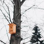 Wooden bird house on a tree. Winter season. thumbnail