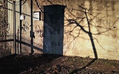 WP_20171217_004 (olivieri_paolo) Tags: supershots shadows trees gates outdoors light
