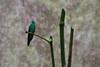 Bamboo Arrangement (Andre Lourenco) Tags: sony alpha sonyalpha 68 alpha68 ilca68 sal18250 nature natureza parquedasaves parque aves park bird birds ave pássaro fozdoiguacu iguacu iguassu iguazu conservation conservacao bamboo bambu