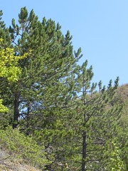 DSCN9563 (Gianluigi Roda / Photographer) Tags: apennines latesummer 2012 mountains geologicalevidences rocks trees woods landscapes
