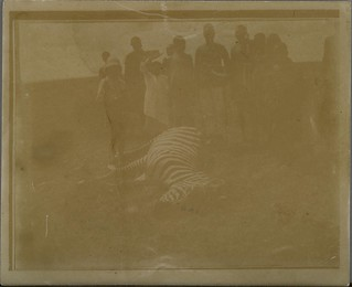 Jorma Gallen-Kallela and his first zebra.  ; Photograph 2.