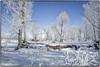 L1010207 (geelog) Tags: 28mmf17summilux leicaq bluesky snow hoarfrost trees winter alberta bowriver calgary fishcreekprovincialpark hullswoods sikomelake ab canada