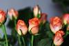 DSC_8856 (PeaTJay) Tags: nikond750 sigma reading lowerearley berkshire macro micro closeups gardens indoors nature flora fauna plants flowers bouquet rose roses rosebuds