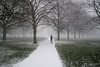 Snow in Kensington Gardens (Luke Agbaimoni (last rounds)) Tags: london snow winter park kensington fog foggy trees
