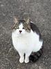 cat's island (Steve only) Tags: olympus pen ep5 olympusmzuikodigitaled 1250mm 13563 f3563 ez m43 cats snap japan