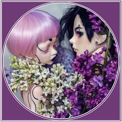 Even and Dan (nekophoenix) Tags: bjd doll art dollzone dim larina boy lilac flower