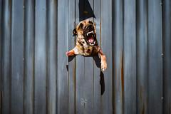 2127 (cabralgabriel) Tags: gabriel cabral fotografia photography street rua cor color