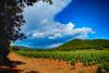 Avant l'orage (GerardMarsol) Tags: france var sudest hyèreslespalmiers laclapière vignes rosédeprovence orage nuages soleil lumières souches raisins