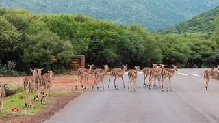 Pilanesberg Nature Reserve 2017