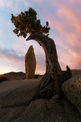 One Tree Hill (Darkness of Light) Tags: joshua tree national park np balanced rock jumbo campground camp sunrise sony a7r2 a7rii zeiss batis 18mm 28 california mojave desert palm springs juniper