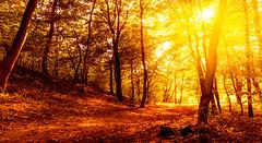 herbst landschaft (c.collardjacques) Tags: landschaft herbst sonne wald natur herbstlich bume baum laub bltter bltterwald sonnenstrahlen golden rot herbstzeit herbstanfang germany