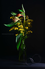 Red-Alstroemeria-with-solidago-yellow-flowers (serena606) Tags: flower stilllife alstroemeria solidago yellow green red leaf vertical moody nopeople lovefornature nature fineart awardwinningphotography lowkey lighting blackpaper rolledpaper delicate scent fragile elegant blackbackground glass transparent bottle transparency reflection dark