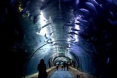 IMG_8113 (valeria.briscolini) Tags: ocean acquarium valencia