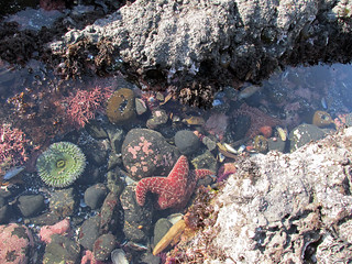 Tidal Pool at Yaquina Head in OR