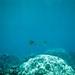 Threadfin Butterfly Fish Hawaii Maui Keone'o'io/La Perouse Bay? Honolua Bay?  95-16-15 8.3.95