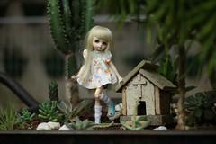 Holiday with Kuki (doll lab) Tags: bjd bjddoll lati latidoll latipureneemo latihybrid latibyurl byurl latiyellow