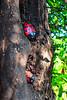 FCX30-Cf10 (FJCD) Tags: paraguay asuncion loma san jeronimo photowalk