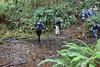A wet wade across a Berry Creek fork (rozoneill) Tags: cape mountain berry creek siuslaw national forest hiking oregon florence princess tasha scurvy ridge trail nelson coastal