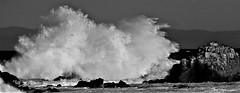 January20. 2018Image3 (Michael T. Morales) Tags: pacificgrovecalifornia waves wavecrashing ptpinos