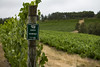 IMG_6511a (Ben Aird) Tags: cape town africa nature wine zebra giraffe springbok bontebok eland grapes duck bokaap seal vineyard vine shiraz remhoogte vergenoed lizard architechture