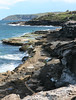 Australian Coastline (philipbouchard) Tags: beach shore ocean rocky cliff bluffs tidepools curlcurl freshwater australia sydney newsouthwales nsw pacificocean northernbeaches boardwalk sandstone water seaside recreation people suburbs waves algae sunshine scenic views sea coast