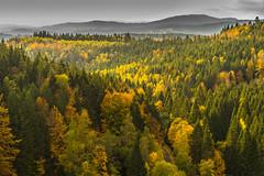 Fall colors - layered (*Capture the Moment*) Tags: 2017 bavarianforest bayerischerwald bäume forest fotowalk landschaften natur nature sonne sonya7m2 sonya7mii sonya7mark2 sonya7ii sonyfe1635mmf4zaoss sonyilce7m2 sun trees wald wetter