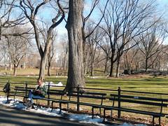 Central Park, NYC (Clara Ungaretti) Tags: centralpark park nature natureza landscape grass trees winter cold sunlight sunny sunnyday branches snow snowing weather reading man manhattan newyork newyorkcity novayork estadosunidosdaamérica estadosunidos unitedstatesofamerica unitedstates us usa nyc