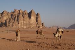Wadi Rum (Luz D. Montero Espuela. 3.5 million visits. Thanks) Tags: jordania wadirum desierto arena sand luzdmonteroespuela travel trip viajes azul cielo pentax k7 roca lossietepilares wadirumprotectedarea unescoworldheritage