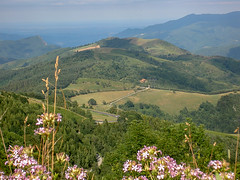 Col d'Ares (RIch-ART In PIXELS) Tags: pyrenees pyrenéesorientales france coldares col mountainpass mountainside mountain landscape sea mediterranean flower fleur tree fields grassland slopes pratsdemollolapreste