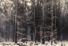 Wintersong (der_peste (on/off)) Tags: forest snow frost mood moody winter wintermood forestscape trees sombre sombrescape fog mist foggy misty