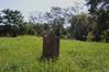(roadkill rabbit) Tags: cemetery dead headstone grave tomb marker grass trees vines louisiana