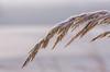 (ErrorByPixel) Tags: frost winter pentaxart smc pentaxd fa macro 100mm f28 wr smcpentaxdfamacro100mmf28wr pentax k5 pentaxk5 errorbypixel grass nature