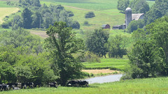Farm (The NYSIPM Image Gallery) Tags: nysipm ipm integratedpestmanagement farm cattle cornell ipmimagegallery cropprotectionandpestmanagementprogram usdanifa cppm cornelluniversity usda nifa nysipmimagegallery