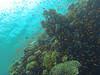 Marvelous (Peter_069) Tags: tauchen diving scuba malediven maldives äqypten egypt wasser water underwater unterwasser padi fische fisch fish shellfish muscheln moräne moränen moraine batfish fledermausfisch koralle korallen coral nemo clownfisch clownfish boot boat vessel blaueswasser bluewater