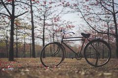 The lonely bi-cycle.. (NALE 1501027) Tags: photographersofbangladesh beautifulbangladesh bangladesh sunamganj shimulbagan boshonto afternoon goldenlights lightandnature beautifullight ambientlight falgun spring flowers colors red orange touring jadukata bicycle park bike