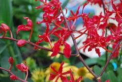 DSC_0319 (el-Obeid) Tags: singapur gardens by the bay orchid macro orquideas flowers